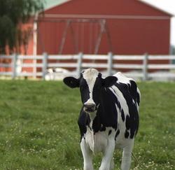 бизнес план сельского хозяйства образец - фото 4